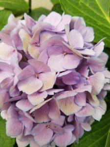 flower-inspired writing