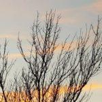 January nature